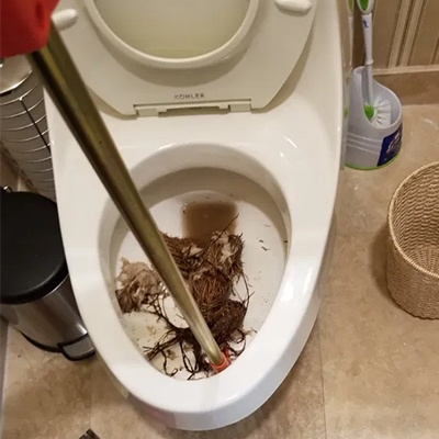 Roots Growing Through Toilet Flange