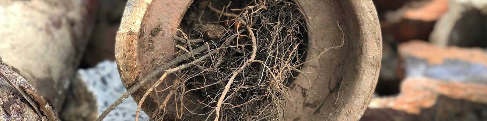 Roots Removal
